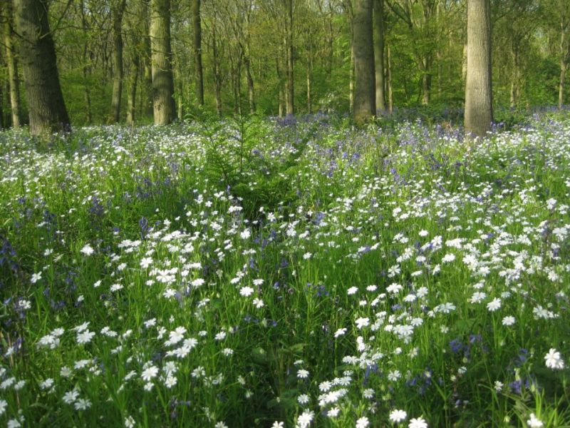 Soulton Wood in Spring