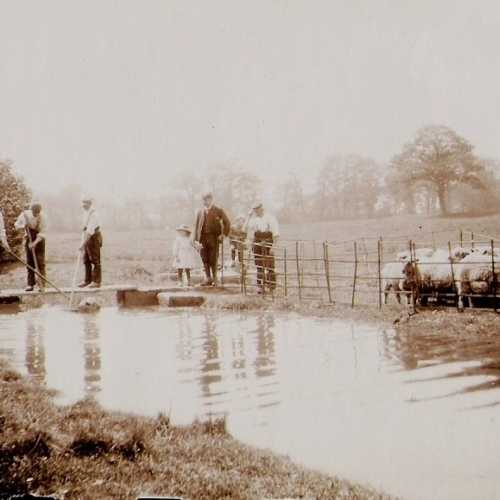1890: Sheep Washing in Soulton Brook